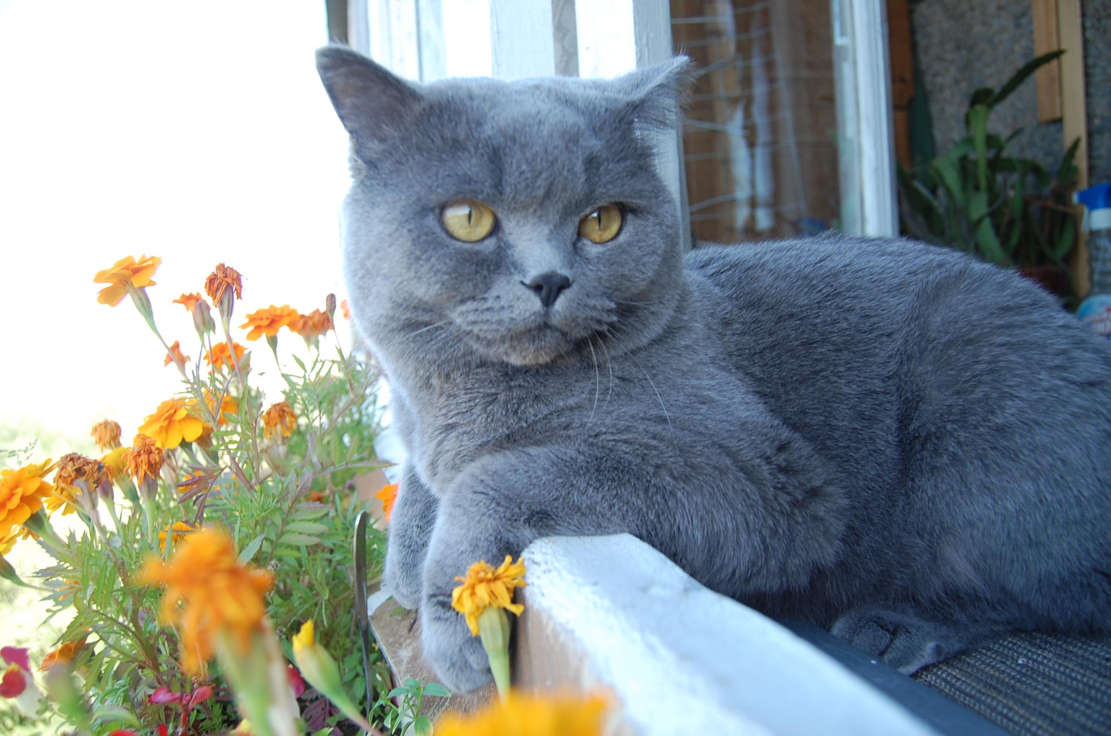 Лютики-цветочки у  меня  в  садочке.
