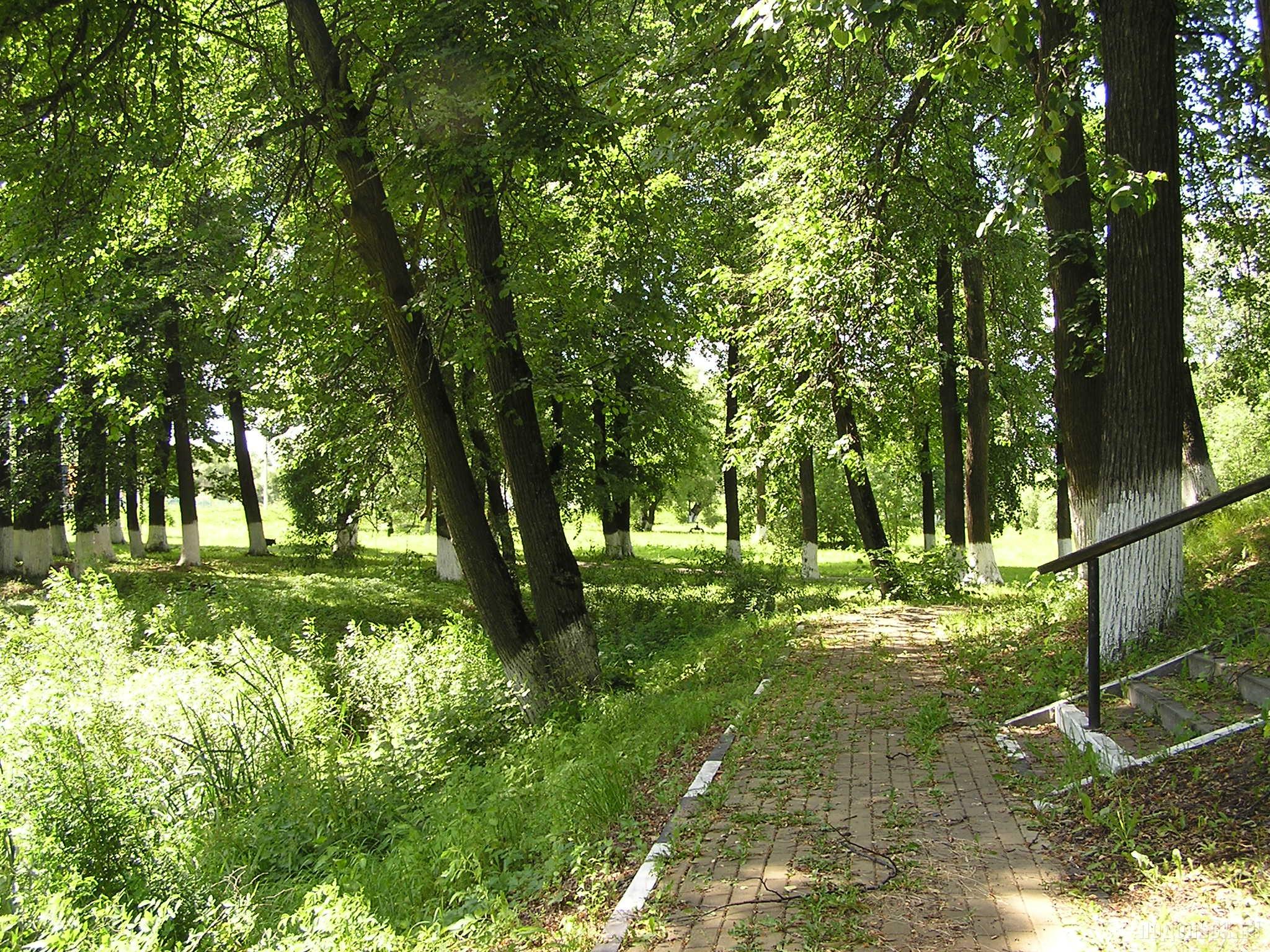 Усадебный парк Сынково. 24.06.2016.