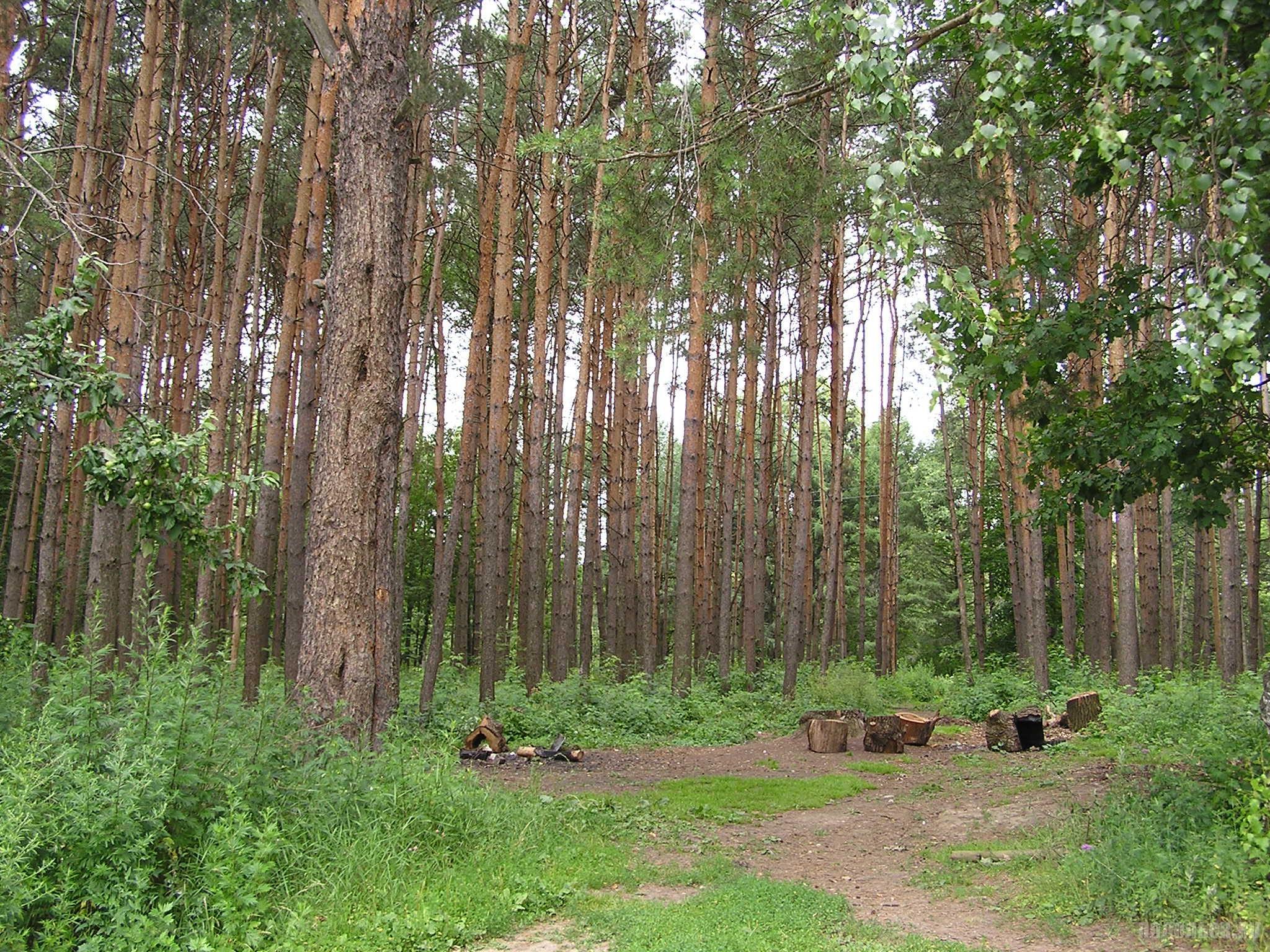 """Парк """"Дубрава"""" в Климовске. 7 июля 2016 г."""