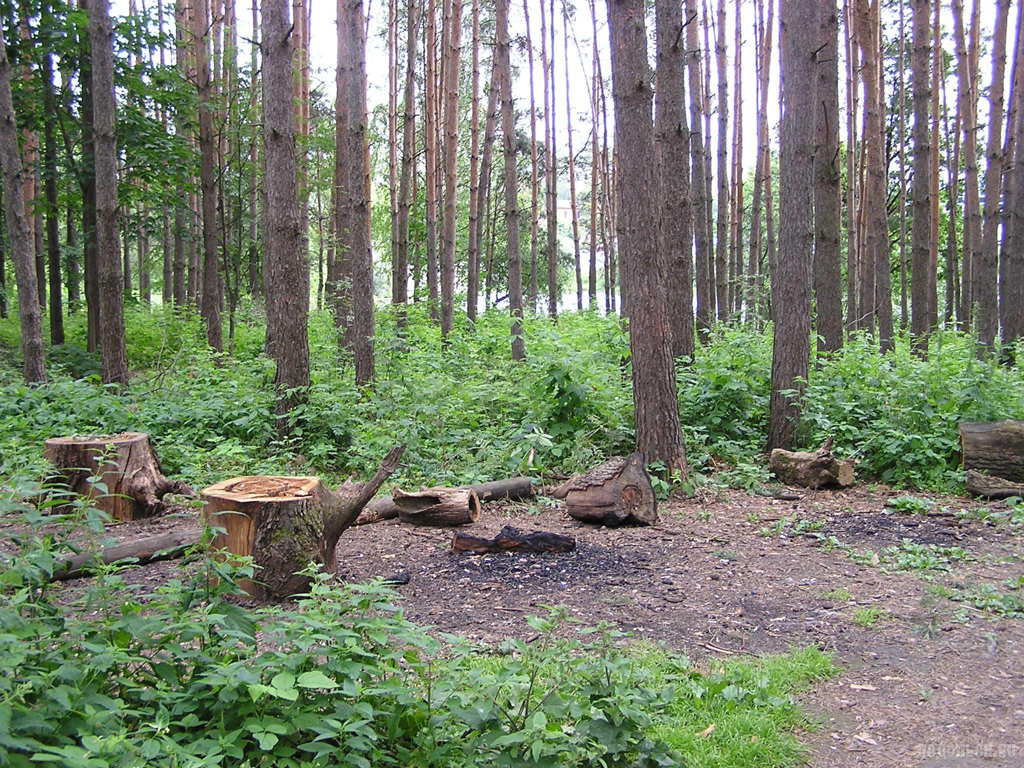 Парк культуры и отдыха Дубрава. 7 июля 2016 г.