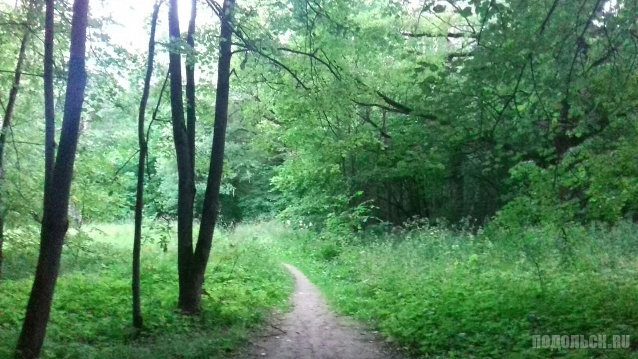 Лес в районе ЮО и улицы Кирова.