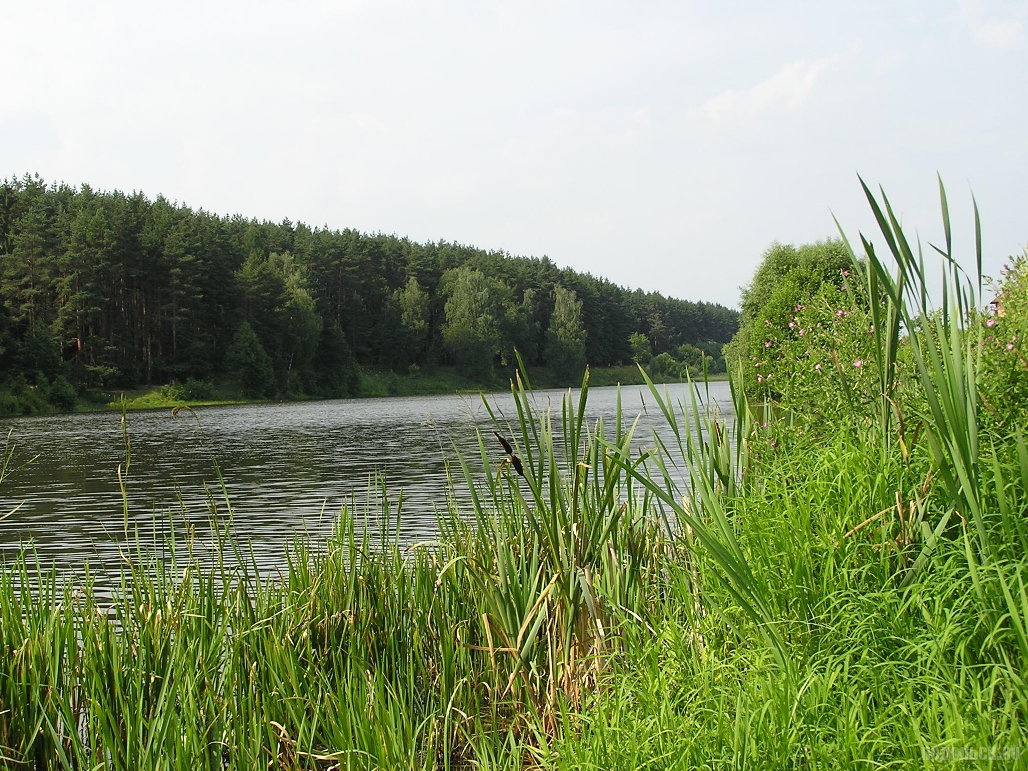 Река Рожай (Сосновка). 16 июля 2016 г.