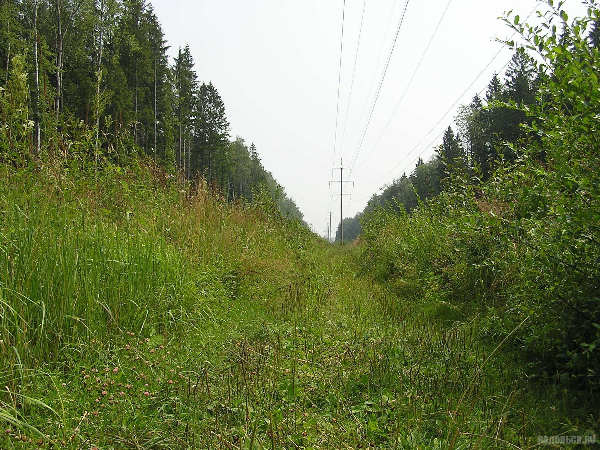Просека у Сергеевки 24 июля 2016 г.