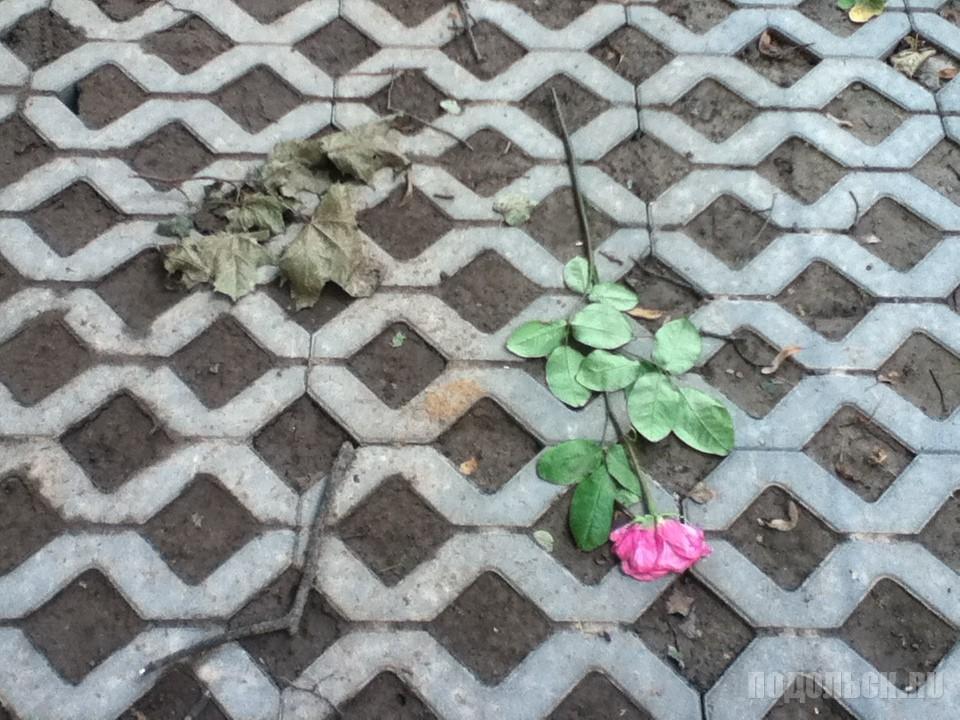 Экопарковка в Климовске. Заводская улица. 25 июля 2016 г.