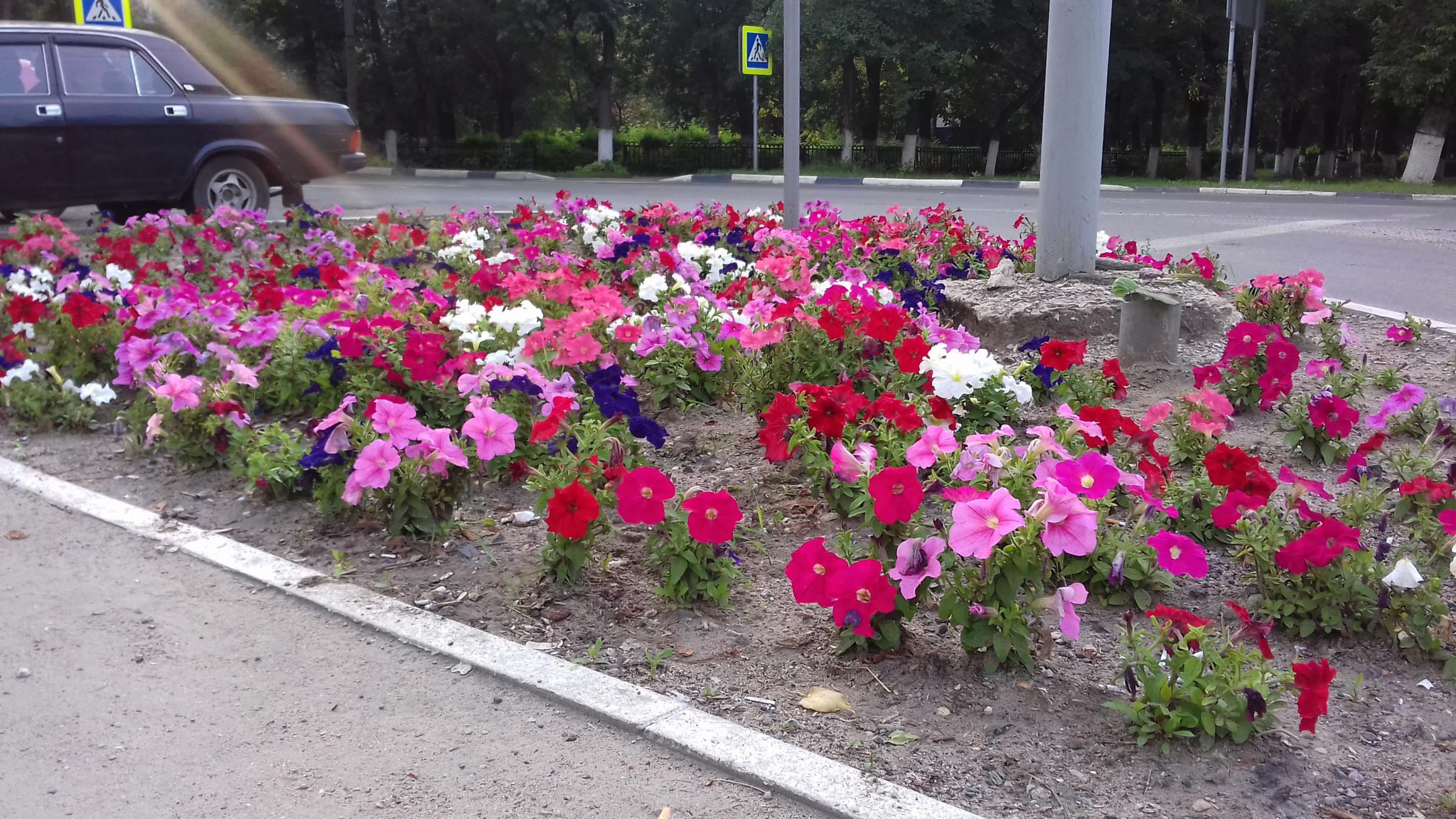 "Цветочки в глине. Лужайка напротив ""Капитолия"""