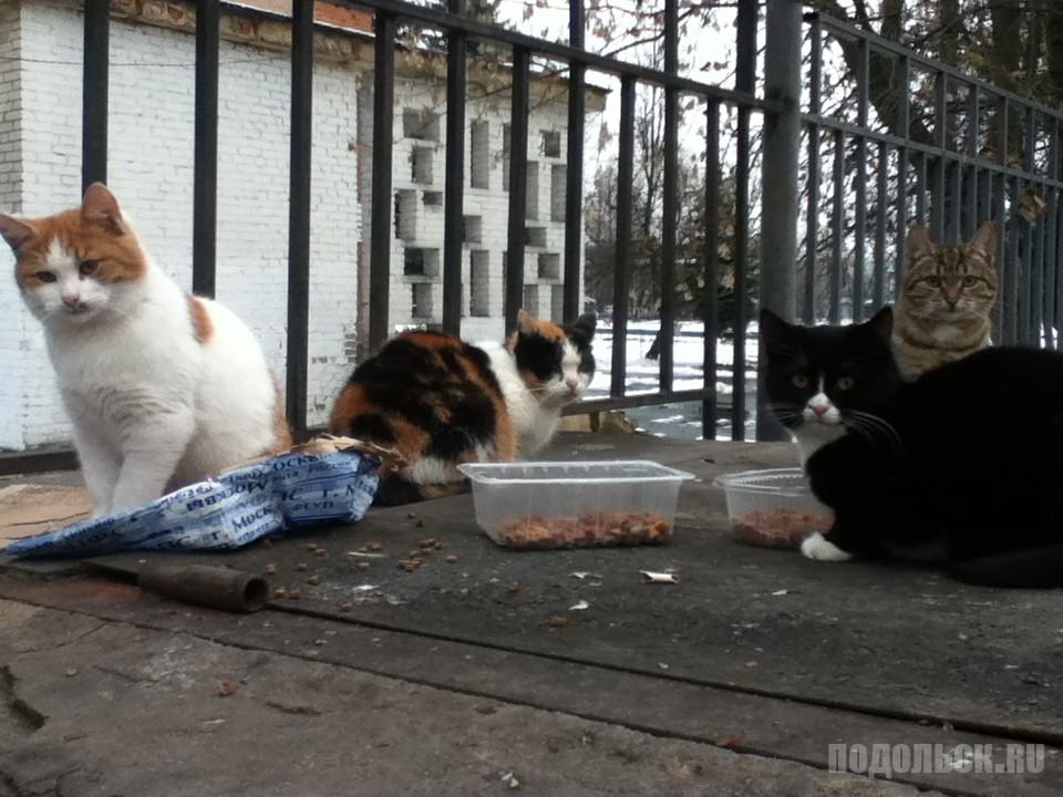 Уличные кошки. Ноябрь 2016 г.