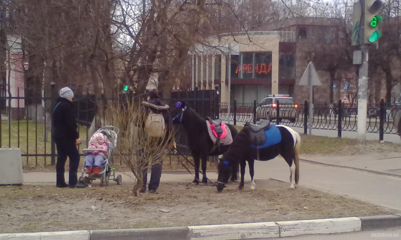 Пони на газоне. Климовск. Апрель 2017.
