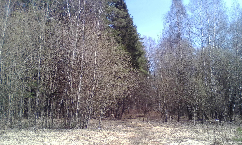 """Климовские """"Елочки"""". Апрель 2017."""