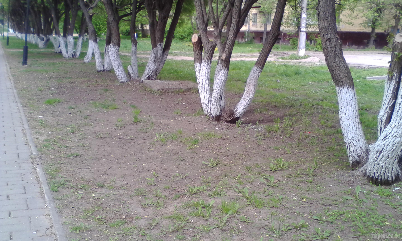 Симферопольская аллея. Последствия тотального выкашивания травы и складирования снега на газоне. Май 2017.