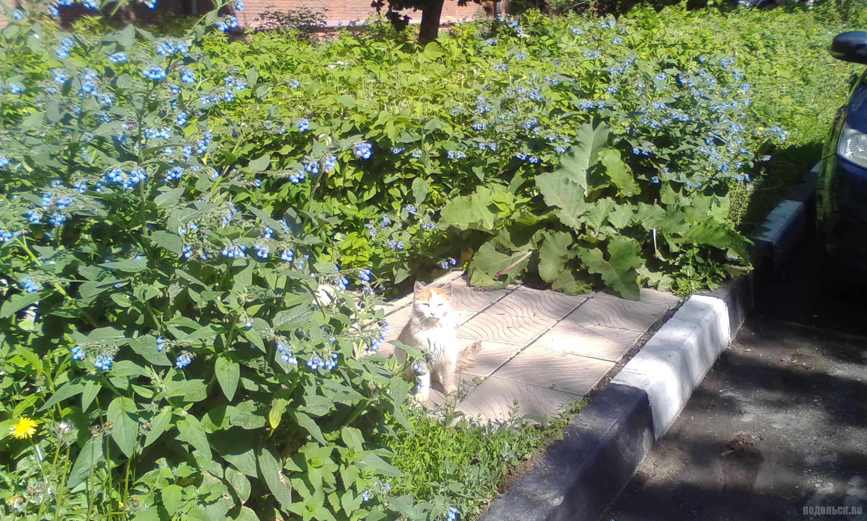 Солнечная кошка на Первомайской улице. Июнь 2017.