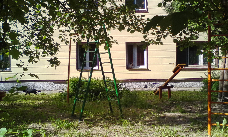 Хозяева двора. Леспроект. Июнь 2017.