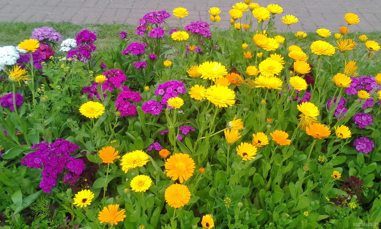 Цветы в Детском парке. Июль 2017.