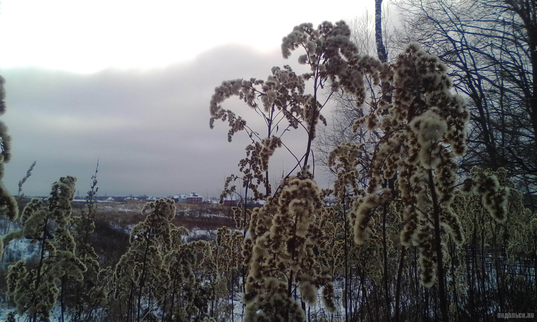 Январь. У д. Сергеевка. 01.2018.