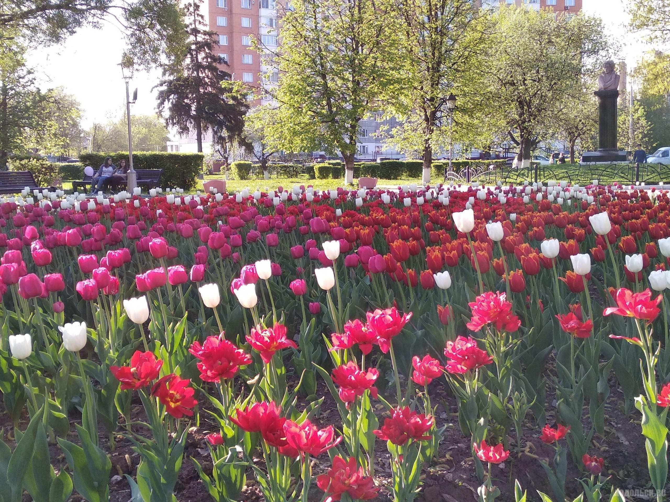 Май, 2018 год. Улица Кирова. Недалеко от здания администрации.