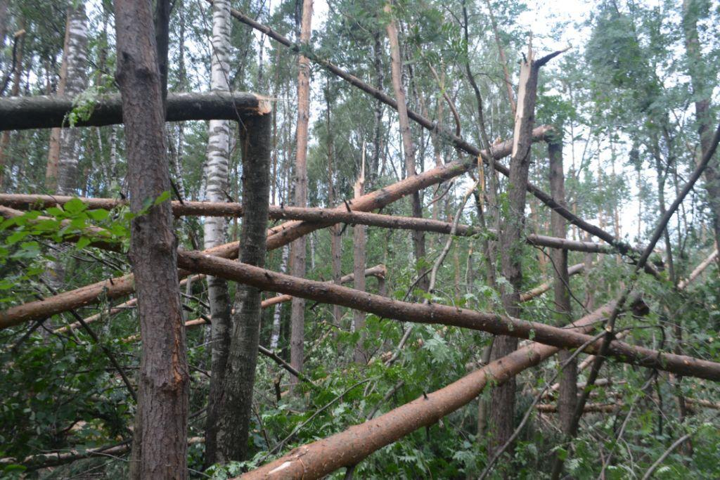 После урагана в Подольске