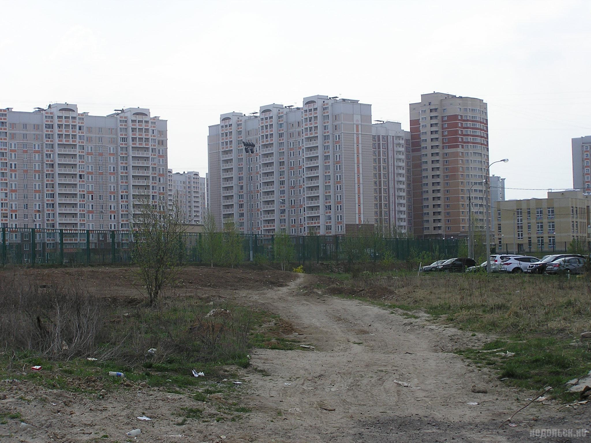 Кузнечики у деревни Докукино. 27.04.2019