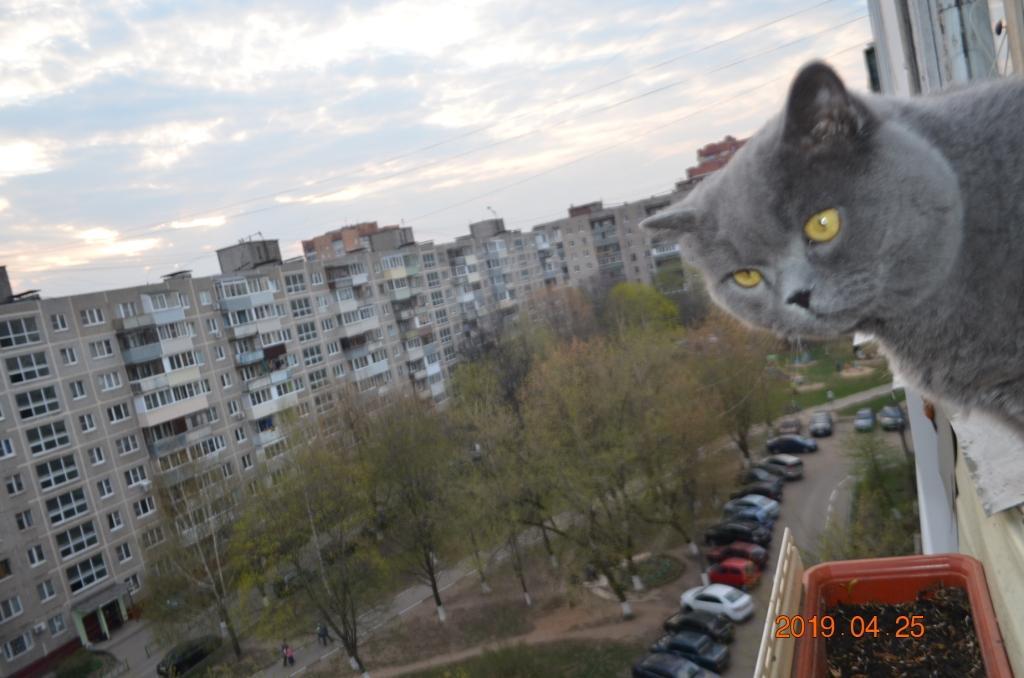 Кот смотрящий