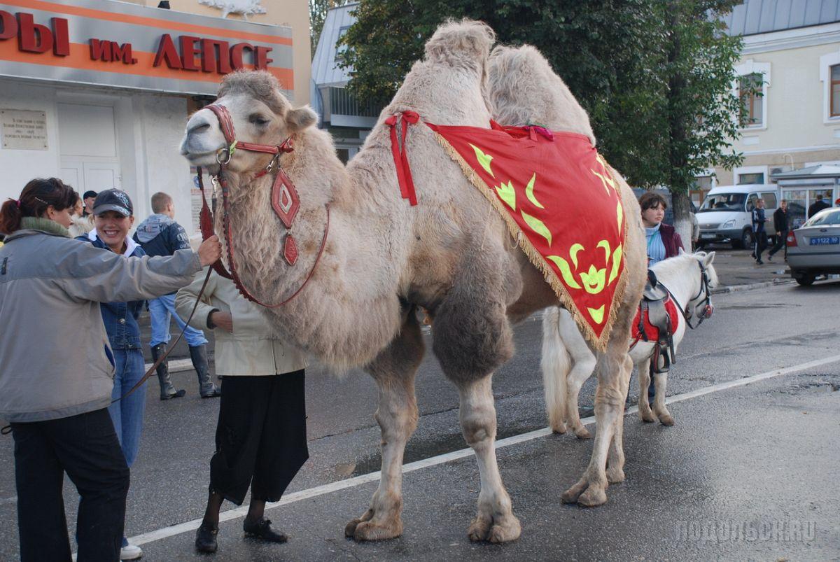 Верблюд у ДК им. Лепсе
