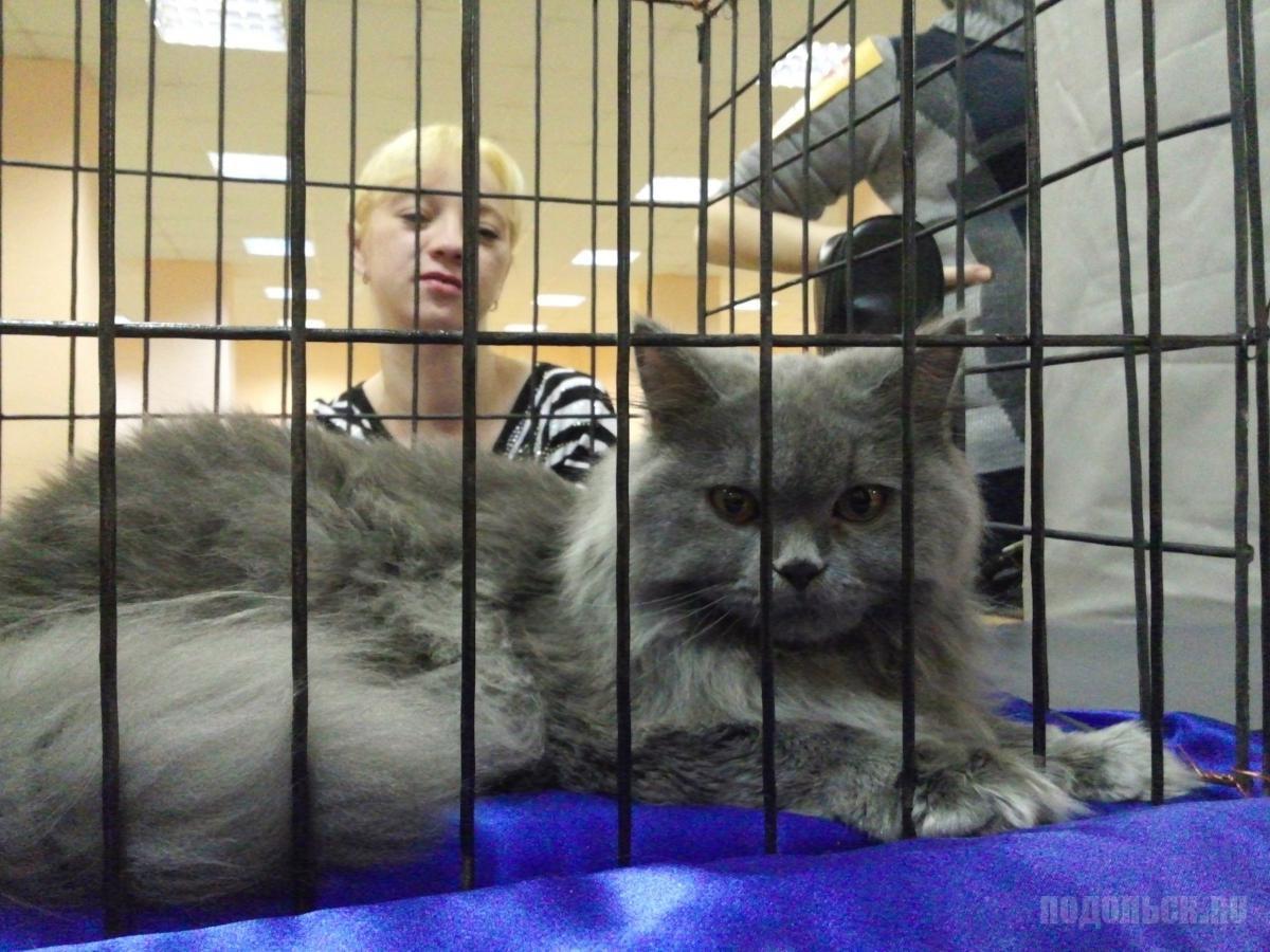 Выставка кошек в ДК ЗиО 24.11.13