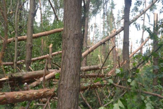 После урагана 28 июля в Подольске