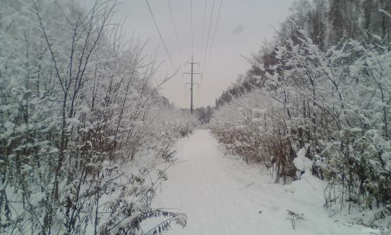 Лесной массив Весенняя. 12.2018