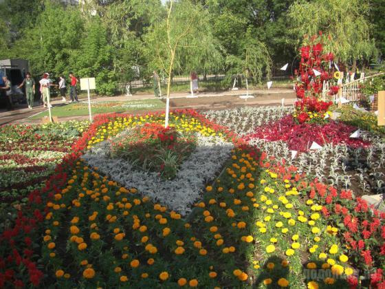 Растения подмосковья цветы